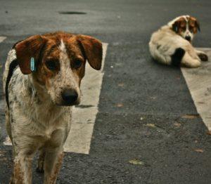 streetdogs-wikipedia